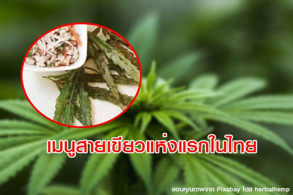 เปิดเมนูเอาใจสายเขียว ร้านอาหารกัญชา แห่งแรกในไทย