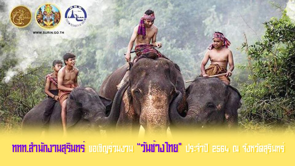 """ททท.สำนักงานสุรินทร์ ขอเชิญร่วมงาน """"วันช้างไทย ประจำปี 2564 ณ จังหวัดสุรินทร์"""