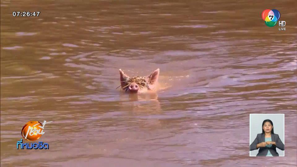 เร่งช่วยสัตว์ เหตุน้ำท่วมหนักรัฐนิวเซาท์เวลส์