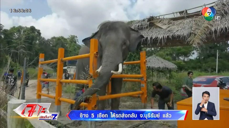 ช้าง 5 เชือก ได้รถส่งกลับ จ.บุรีรัมย์ แล้ว : ประเด็นข่าวรอบวัน