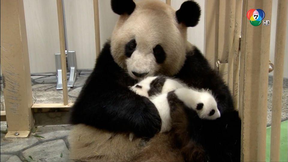 สารคดี สวนสัตว์หนูน้อย Animal Babies : Mini Album ตอน 7
