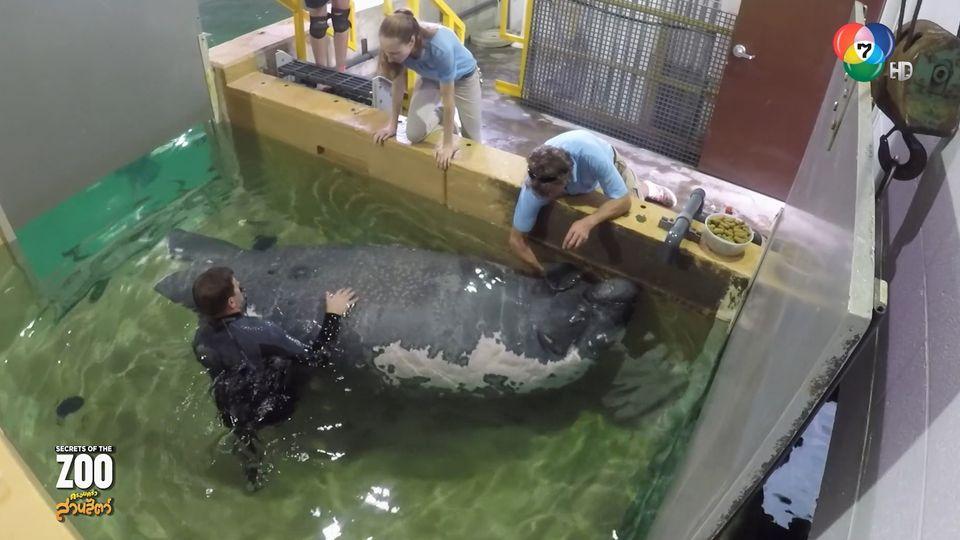 สารคดี Secrets of the Zoo ครอบครัวสวนสัตว์ ตอน 2 (1/2)