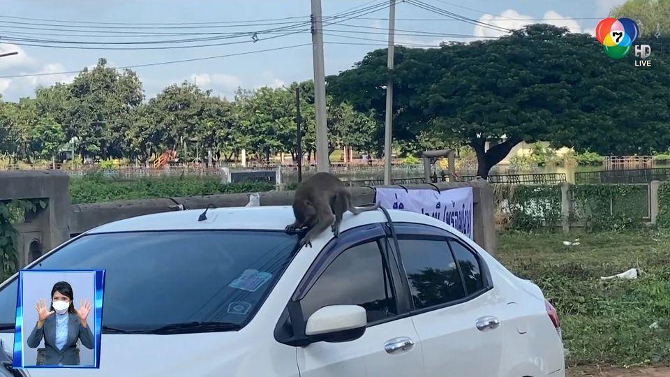 สะเก็ดข่าว : ลิงชอบรถ