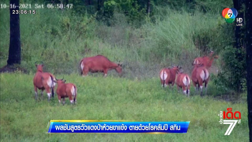 ผลชันสูตรวัวแดงป่าห้วยขาแข้ง ตายด้วยโรคลัมปี สกิน