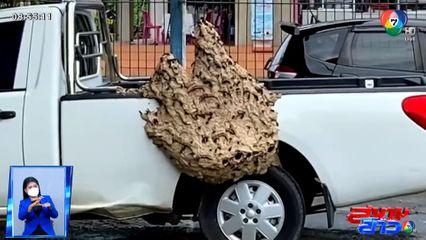 จอดรถนานเป็นเหตุ รถกระบะกลายเป็นรังต่อ กว้าง 50-60 ซม. สูงประมาณ 1 เมตร