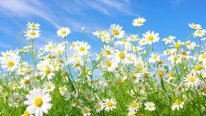 ดอกไม้แห่งความเจริญรุ่งเรือง ฮวงจุ้ยที่เหมาะกับบ้านคุณ
