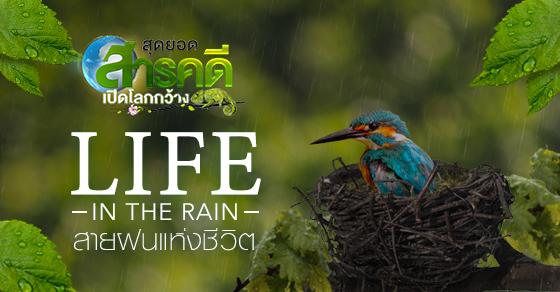 ดูสารคดี Life in the Rain สายฝนแห่งชีวิต