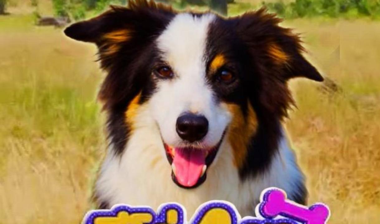 ดู Dogs with Extraordinary Jobs ฮีโร่ 4 ขา มะหมาคู่ใจ